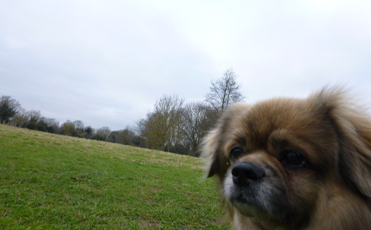 Dog Sitting, Pet Services Warlingham - Dog Walking