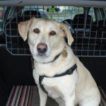 Pet Services Warlingham - Dog Sitting