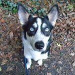 Pet Services Caterham Dog Sitting