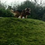 Pet Services Warlingham - Dog Walking