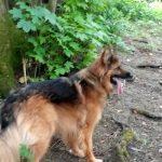 Pet Services Warlingham - Dog Walking - Dog Sitting