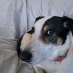 dog sitting, Pet Services Warlingham - Dog Sitting